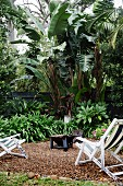 Tropical garden area with white wooden deck chairs on gravel floor in front of banana trees and palm trees
