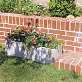 DIY-Blumentrog aus Beton mit Wandelröschen vor Klinkerfläche