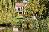 Idyllic summer garden with weeping willow on river bank, trees and house in background