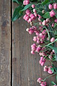 Pink spindle seed pods on wooden surface