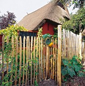 Paling fence outside thatched cottage