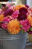 Dahlias of various colours in zinc bucket