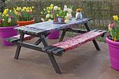 Picknickgarnitur mit Wachstüchern und bunten Blumenkübeln mit Frühlingsblumen