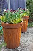 Rostige Blumenkübel mit Tulpen und Gräsern auf Kieselsteinboden