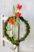 Three tulips with bulbs in wreath of moss hung from chair backrest