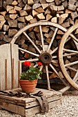 Potted geranium in front of wagon wheels and stacked firewood in garden