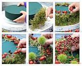 Making decorative cake-shaped bird feeder from moss, berries and sweet chestnuts