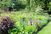 Bed of various flowering perennials in summery garden