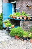 Foliage plants and geraniums in terracotta pots on shelf outside brick house with open blue exterior door