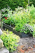 Flowering perennials and herbs in raised bed