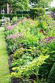 Various flowering perennials in summery garden