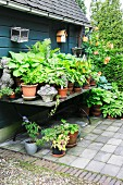Potted plants on table outside traditional garden shed