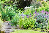 Purple wallflowers and other flowering perennials in summery garden