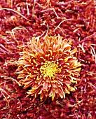 Orange flower on orange woollen rug