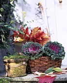 Autumnal arrangement of colourful leaves and purple ornamental cabbages in basket
