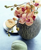 Sprig of orchids in vase with veined surface between two melons