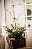 Christmas tree decorated simply with red candles in large basket on chair