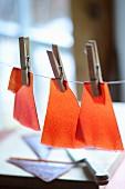 Fruit leather drying on washing line