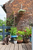 Cat sitting in front of potted plants on summery terrace