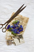 Still-life arrangement of vintage scissors, grape hyacinths and black and white photo on yellowed paper