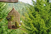 Wicker birdcage with moss birds hung from wooden balcony