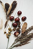 Autumnal still-life arrangement of natural materials: conkers, fir cones and feathers