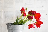 Red tulips in zinc bucket against wall papered with book pages