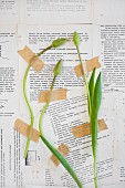 Tulip bids stuck on wall papered with book pages with tape
