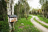 Curved woodland path and decorative house-shaped letterbox on birch trunk