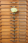 Green carnations on handle of old chest of drawers