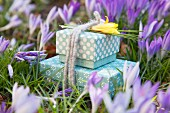 Gift boxes tied with felt cords and decorated with yellow crocuses amongst purple crocuses