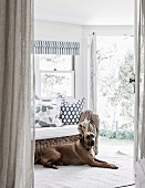 Dog on carpet runner in front of cozy wicker sofa and open patio door