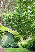 Gardens with green bushes, trees and a green garden shed