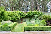 Cut box hedges as bed borders next to the lawn path to the garden house with trees