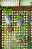 Zinc watering cans hung on wooden grids and hanging baskets with vintage flair