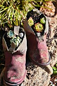 Shoes planted with succulents