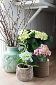 Spring arrangement of three hydrangeas and branches