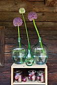 Alliums in green demijohns and red onions in mason jars on wooden shelves