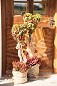 Moss hearts with fruits, honesty, heather and houseleeks in front of exterior door