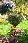 Chrysanthemenbäumchen, dekoriert mit Efeu, Calluna, Hagebutten und gelber Chrysantheme