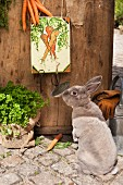 Rabbit next to hand-made key panel with carrot motif on wooden door in garden