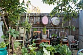 Small plants in containers on vintage wooden chairs in front of weathered wooden wall with suspended metal tubs in the garden