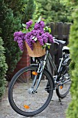 Lilac in wicker bicycle basket