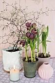 Schachbrettblumen, Tulpe und Blumenzweige im Topf eingepflanzt, davor brennende Kerze