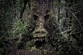 Tree with face in dense woods