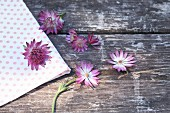 Astrantias on weathered wood and fabric
