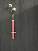 Two dandelion clocks in pink test-tube vase fixed on wall; 3D rendering