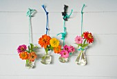Zinnias in laboratory flasks hung on wooden wall