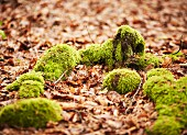 Mossy roots on a forest floor