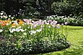 Tulips in round flower bed in sunny garden